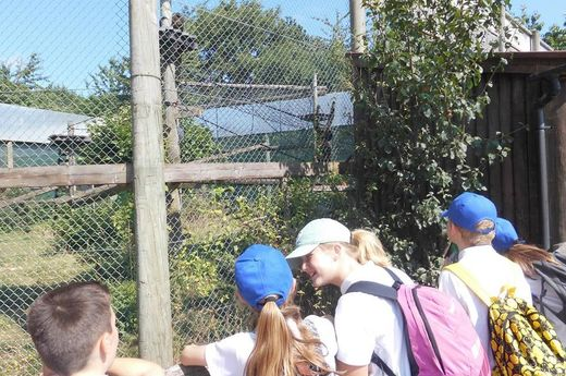 Year 6 Trip - Monkey World